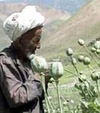 Канадский профессор: «США контролируют поставки наркотиков из Афганистана»