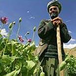 Кто командует афганским наркотрафиком
