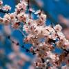 Навруз — праздник весны