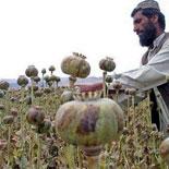 УНП ООН опубликовало доклад о производстве опиума в Афганистане