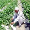 АБР и ЕС выделят 76 млн. долларов на обеспечение продовольственной безопасности жителям ИРА